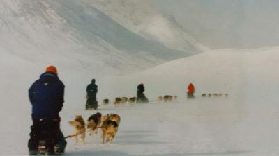 Neljä koiravaljakkoa vuoristoisessa ja lumisessa maastossa selkäpuolelta kuvattuna.