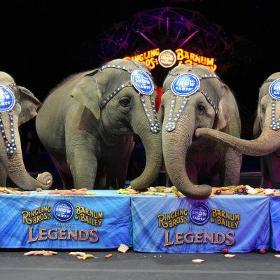 Cirkusföreställning i New York i mars 2016.