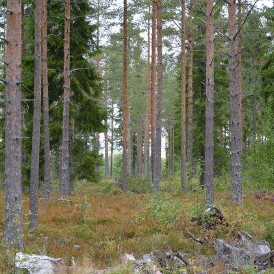 Söderfjärden skymtar bakom träden.
