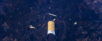 Kuvassa on luontoon hylätty tupakantumppi.