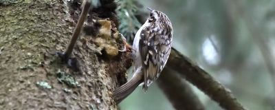 En liten fågel i ett träd