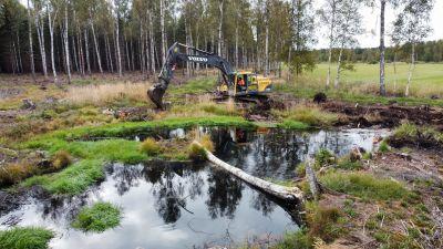 Grävmaskin som gräver upp våtmark i Täktom i Hangö för WWF:s RANKKUprojekt som ska minska på utsläppen i Östersjön.