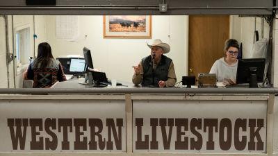 Auktionsledaren Cease Weaver i sitt bås. Boskapsauktion i Montana.