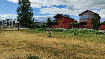 En torr och gulnande gräsmatta framför ett rött hus.