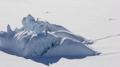 En isbjörn på ett snötäckt isberg utanför nordöstra Grönland den 1 juli 2021..