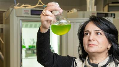 Yagut Allahverdiyeva-Rinne, pristagare i hållbar bioteknik.