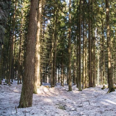 Träd i en vintrig skog
