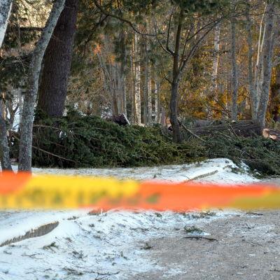 Två träd har fällts av stormen
