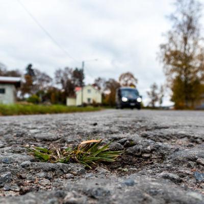 Grop med gräs mitt på en landsväg.