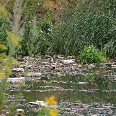 Skräp som ligger i vattnet med gräs i bakgrunden.