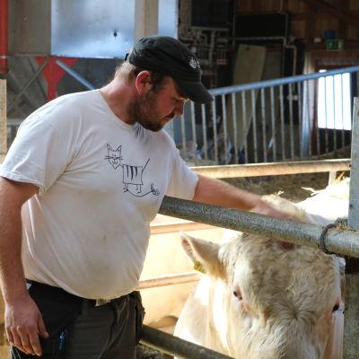 En bonde klappar en av sina kor på huvudet.