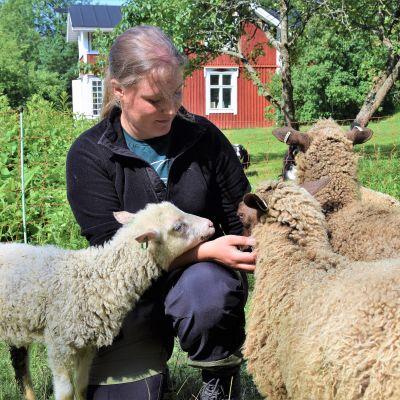 Emmi Nurmi har får på Bovik gård i Snappertuna, Ekenäs.
