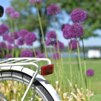 En vit cykel och i bakgrunden stallörsparken.