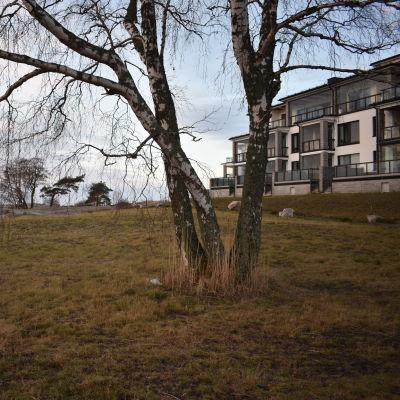 En gräsplan och ett träd. I bakgrunden ett flervåningshus och klippor,