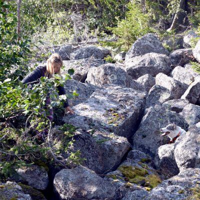 Heidi Kullas-Pada jagar mink tillsammans med hunden Shira på Mickelsörarna i Vörå.