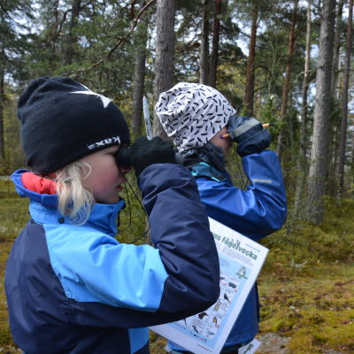Två pojkar i blå jackor tittar genom kikare ut i skogen och spanar efter fåglar..