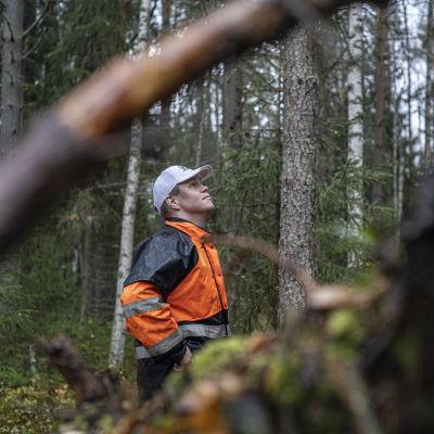 Metsänomistaja Pekka Manninen taivastelee Paatsamakorven suojelumetsää.