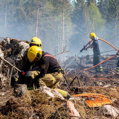 Palomiehet sammuttamassa maastopaloa
