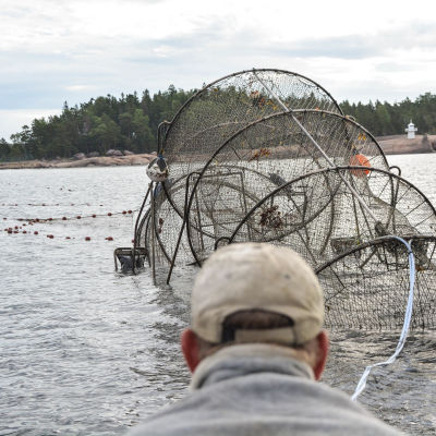 Mikael Lindholm tar upp ryssjan för att kolla fiskfångsten.