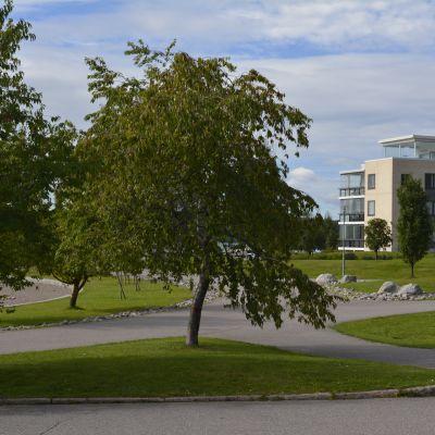 Puita Ruorinimen puistossa Lahdessa