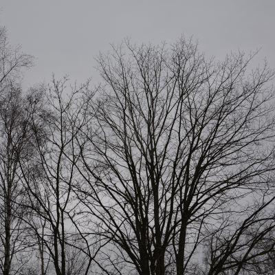Mörka, kala kvistar mot en grå himmel.