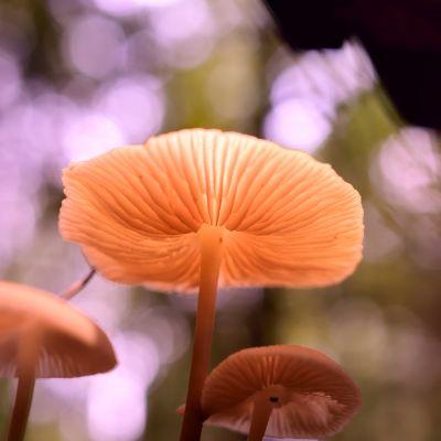 Sieniä kauniissa valossa