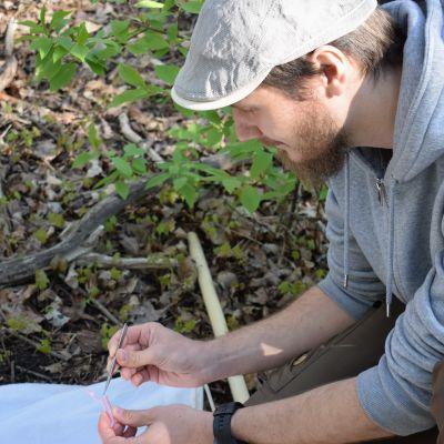 Tutkija Jani Sormunen laittaa puutiaista putkiloon.