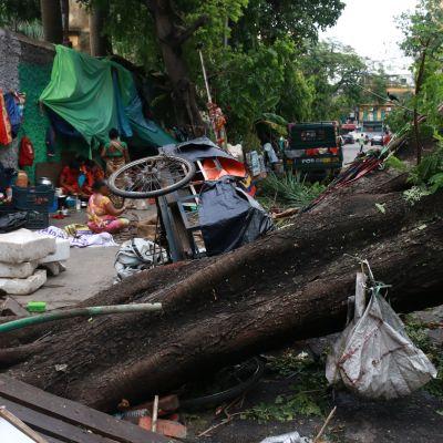 Förödelse på en gata i Calcutta efter stormen Amphangs framfart.
