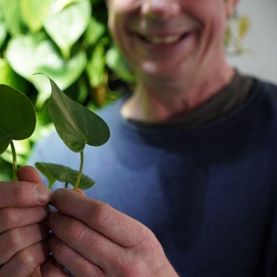 En planta och två händer.