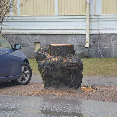träd som nyligen fällts i ekenäs centrum