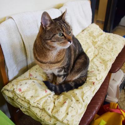 kattkafe i Vik, katten Jessica