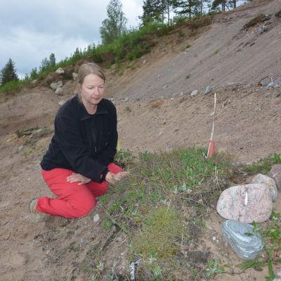 Ledande forskare Terhi Ryttäri inspekterar ekosystemhotellet i Tegelbacken.