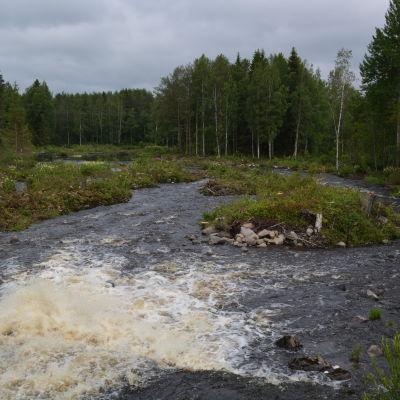 Björkfors i Esse å