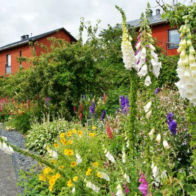 Blommor i August Eklöfs park.