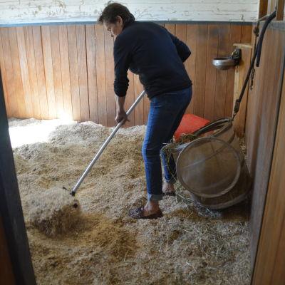 Gun Järnefelt vill att små företag får miljötillstånd för att bränna hästgödsel.