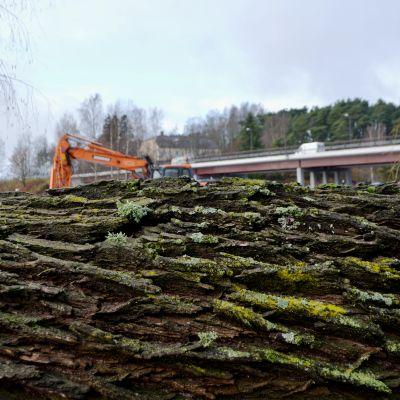 fälld trädstam med bro och grävmaskin i bakgrunden