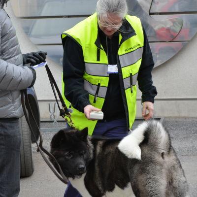 Veterinär Hanna Kukkola kontrollerar om hunden Viking är vaccinerad och har passet i skick.