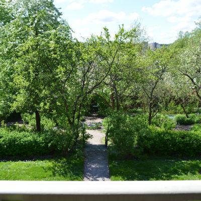 fredrikas trädgård
