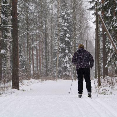humla skidspåret i borgå öppnade tidigt år 2016 - den 10 november
