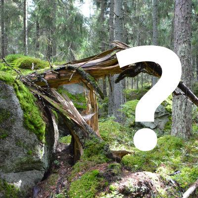 Ett vitt frågetecken på ett foto av en skog.