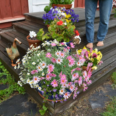 Barfota fötter på trappa med blommor.