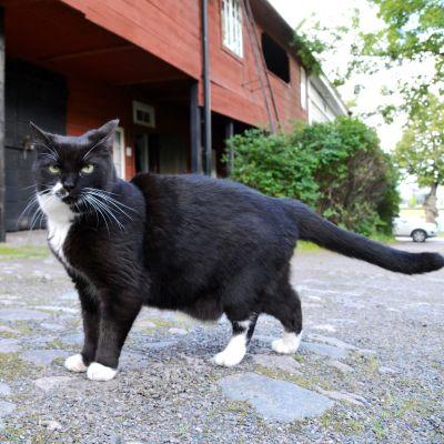 Katten Lusse framför en röd boda på innergården av Ågatan 19 i Borgå.