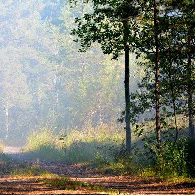 Rök från skogsbrand.