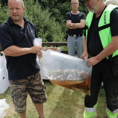 Gräskarparna som planterats ut i Tjudö träsk på Åland är två år gamla, väger ett halvt kilo och är 30 centimeter långa. Men de kan bli 20 år och väga nästan 20 kilo.