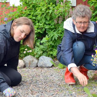 Elin Vide och Majen Norrholm rensar en grusgång.