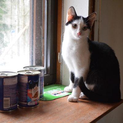 katt på fösnterbräde