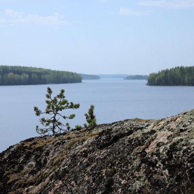 Järvimaisema Saimaalla toukokuussa 2021. Etualalla kalliota.