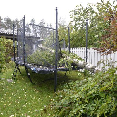 Puu kaatunut omakotitalon pihassa