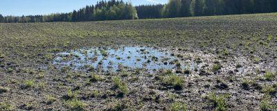 Vesilammikoita märällä kevätpellolla Sastamalassa.