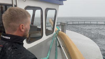 En man står ute på en fiskarbåt och matar fiskar i en odling.